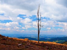 A Lone Dry Tree On Mount Ondr...