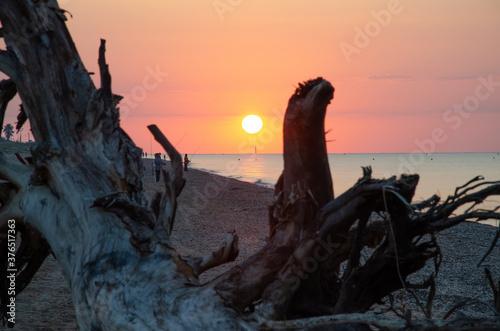 Amanecer en la playa tras tronco arrastrado por temporal Gloria. Poster Mural XXL