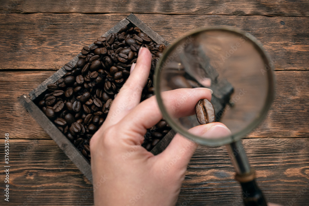 Fototapeta Woman is selecting a coffee beans with magnifying glass. Selected coffee concept.