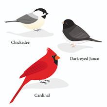 Winter Birds: Chickadee, Dark-eyed Junco, And Cardinal