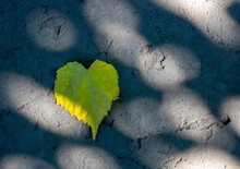 Yellow Leaf Heart Lies On The ...