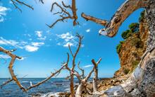 Twisted Tree On Beach