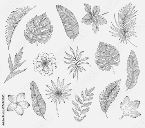 Fototapety, obrazy: Set of tropical leaves and flowers. Plants isolated on white background
