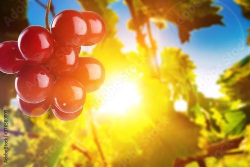 Grape. Fototapet
