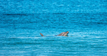 Dolphins Surfing And Swimming