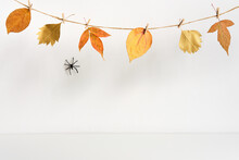 Halloween Backdrop With Spider...