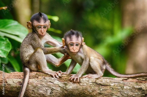 Photographie Small cute baby monkey in the forest