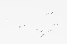 A Flock Of Birds Flying In The...