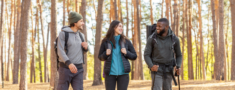 Fototapeta Cheery friends backpacking together by pine forest