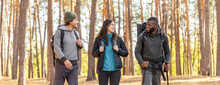 Cheery Friends Backpacking Together By Pine Forest