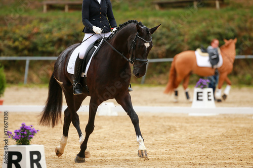 Horse Dressage Dressage horse in the traverse in a dressage test from the side with rider Fototapet