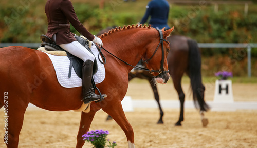 Fotografie, Tablou Horse dressage dressage horse in the gait step in a dressage test from the side with rider