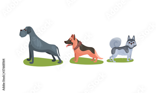 Fototapeta Purebred Dogs or Canine with Sheep Dog and Husky Standing on Green Lawn Vector S