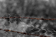 Rusted Barbed Wire Through Fli...