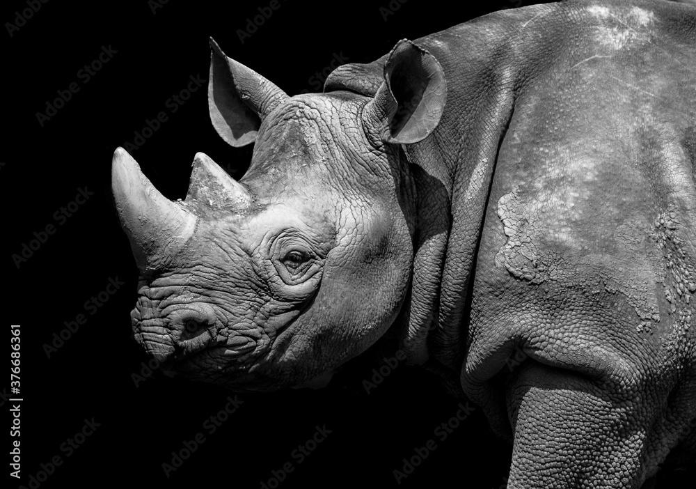 Fototapeta rhino on black