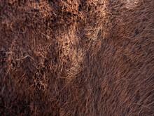Brown  Horse Spring Skin After...