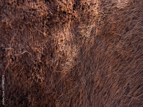 Tablou Canvas Brown  horse spring skin after brushing