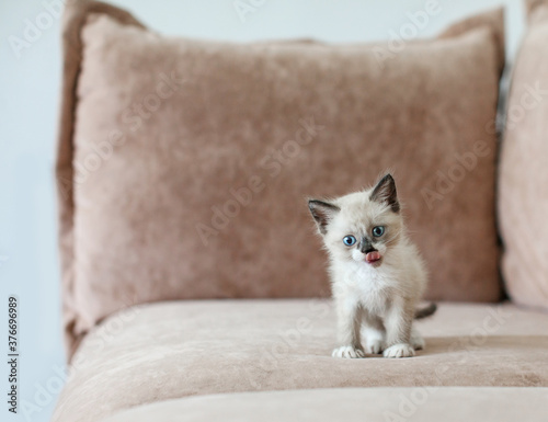 Kitten is on the sofa