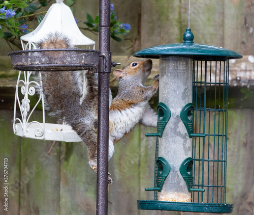 Photo Closeup shot of a cute chipmunk jumping on a birdcage