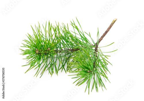 Fototapeta Pine branch on white background