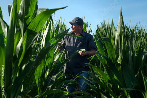Fényképezés Farmer standing in corn field on farm in rural country, portrait, person, man, a