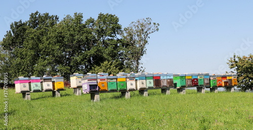 Obraz na plátně Beehives placed in the forest