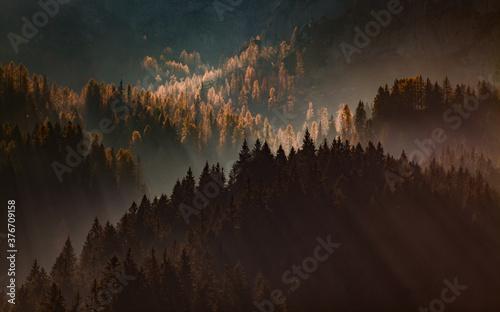 sun-rays through misty pine forest autumn nature background Fototapet