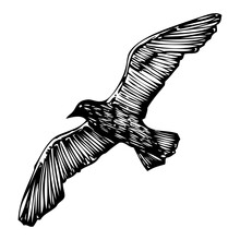 Seagulls Bird, Nautical Sailor Tattoo Sketch. Black Stroke Of Flying Sea Gull Silhouette On White Background. Marine Drawings Shape Of Water Bird In Vector.
