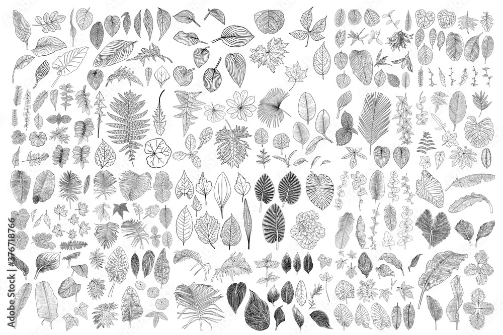 Fototapeta Tropical leaves collection. Isolated fern elements on white background. Set of jungle forest and domestic home leaf, exotic eucalyptus foliage, natural real live palm leaves, herbs drawing. Vector.