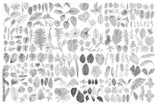 Obraz na plátně Tropical leaves collection