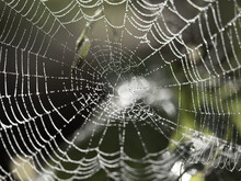 Photo Of A Spider Web Covered ...