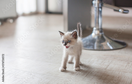 Kitten in the kitchen