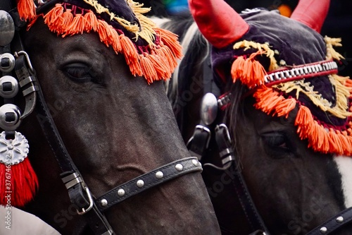 A pair of dark brown horses dressed up with vibrant red headgear for carriage rides Wallpaper Mural