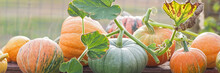 Green And Orange Pumpkins In G...