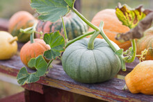 Green And Orange Pumpkins In G...