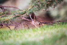 Rabbit Hiding Under The Tree