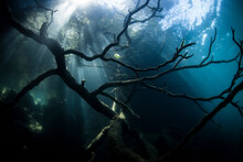 Tree Remnants Underwater