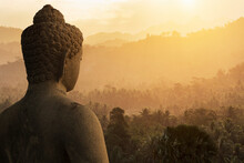 Buddha And Forest, The Buddhis...