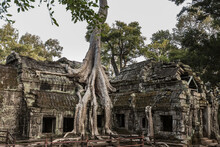 Ruins With Overgrown Tree, Ta ...