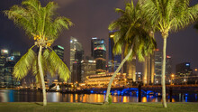 Palm Trees In Front Of Financial District At Night, Singapore
