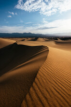 Mesquite Sand Dunes At Dawn, D...