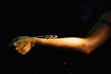 Chameleon On Arm At Night,  Kirindy Mitea National Park, Madagascar, Africa