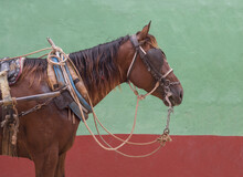 Harnessed Horse,Trinidad Sancti Spiritus, Cuba