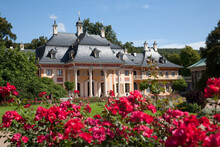Pink Roses And Pilnitz Castle,...