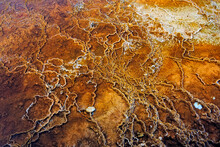 High Angle View Of Yellow Bacteria Growing At Mammoth Hot Springs
