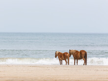 Spanish Mustang Standing By Sea On Beach