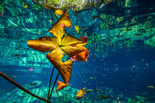 Water Lilies And Fish In Sea