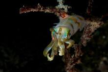 Close Up Of Squid