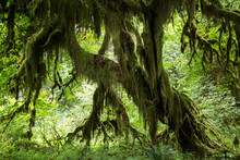 Moss Covered Tree In Forest