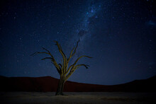 View Of Starry Sky Over Bare T...
